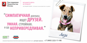 Реклама фонда помощи животным: симпатичная девушка ищет друзей